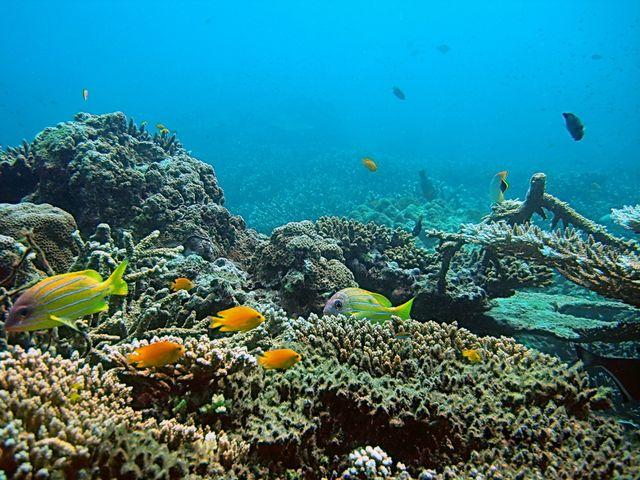 Tropische Unterwasserwelt Korallen-Riff