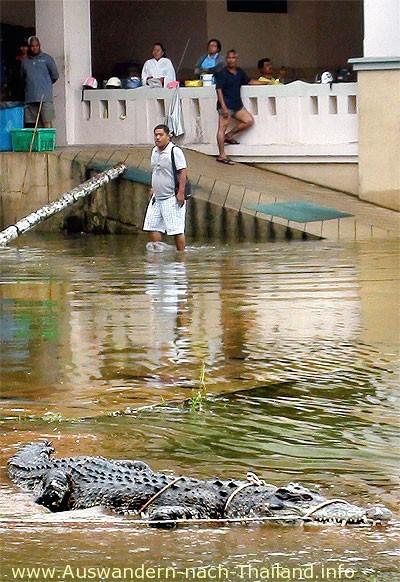 11 Krokodile entkommen sind! 5 sind bisher wieder eingefangen und der Rest ist momentan noch flüchtig!